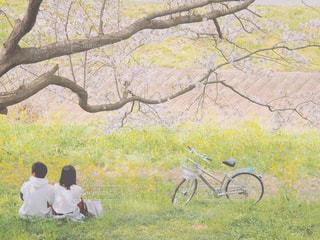 木の中に座っている人々のグループの写真・画像素材[3053786]