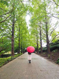歩道にピンクの花が咲く木の写真・画像素材[3140050]