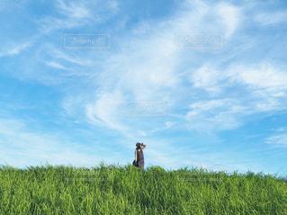 風を感じての写真・画像素材[3242395]
