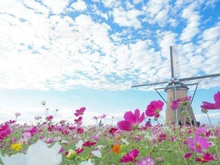 ピンクの花のグループの写真・画像素材[3338293]