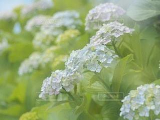 花のクローズアップの写真・画像素材[3338296]