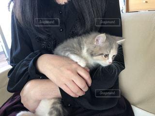 猫を抱いている人の写真・画像素材[3360145]