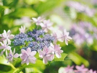 花のクローズアップの写真・画像素材[3374904]