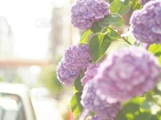 花のクローズアップの写真・画像素材[3374906]