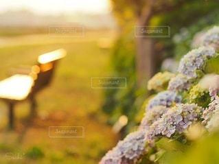 草のクローズアップの写真・画像素材[3374905]