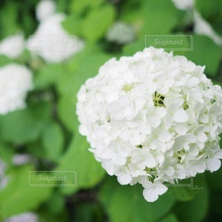 花のクローズアップの写真・画像素材[3374910]