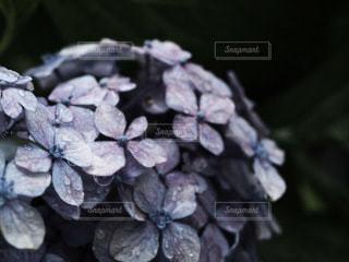 花のクローズアップの写真・画像素材[3374918]