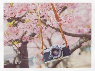春のお散歩の写真・画像素材[3378861]