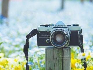 花のクローズアップの写真・画像素材[3378874]