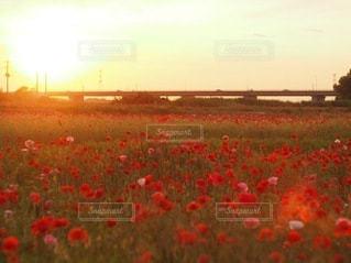日立海浜公園を背景に緑豊かな畑に花が立っているの写真・画像素材[3394845]