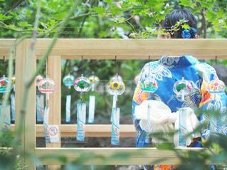 庭の色とりどりの花のグループの写真・画像素材[3397772]