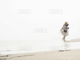浜辺を歩いている鳥の写真・画像素材[3420919]