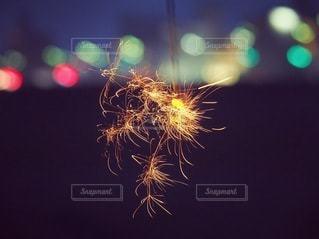 夏の終わりの写真・画像素材[3609472]