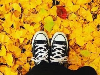 足元の秋の写真・画像素材[3712677]