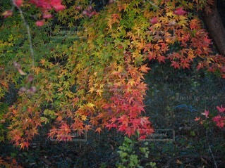 花園のクローズアップの写真・画像素材[3712788]