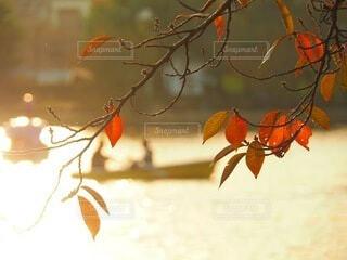 木からぶら下がっているオレンジの写真・画像素材[3712791]