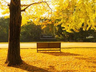 黄金色に包まれたベンチの写真・画像素材[3717985]