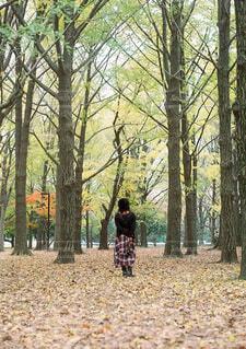 森の中の人々のグループの写真・画像素材[3897986]