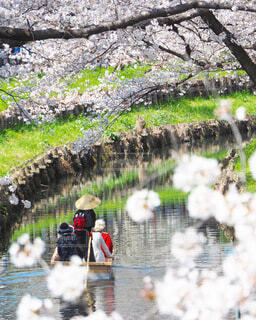 川の上に座っている鳥の群れの写真・画像素材[4009606]