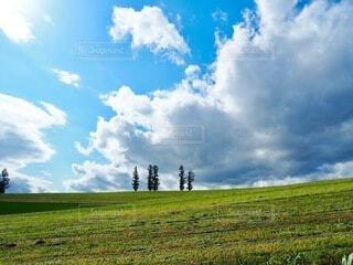 緑豊かな畑のクローズアップの写真・画像素材[4094362]