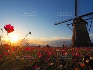 花のクローズアップの写真・画像素材[4097319]