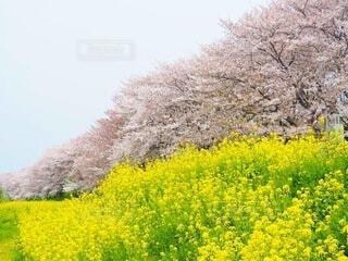 花のクローズアップの写真・画像素材[4097344]