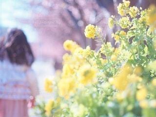 花のクローズアップの写真・画像素材[4210940]