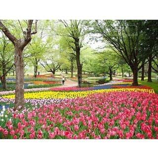 花園のクローズアップの写真・画像素材[4211039]