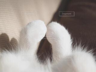 横になってカメラを見ている猫の写真・画像素材[4252936]
