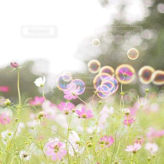 花のクローズアップの写真・画像素材[4252944]
