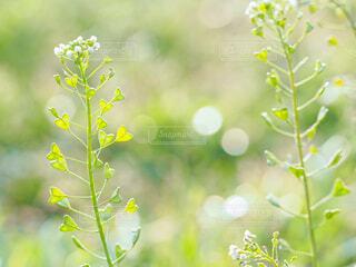 花のクローズアップの写真・画像素材[4252951]