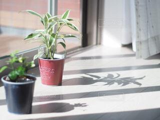 テーブルの上に花の花瓶の写真・画像素材[4259065]