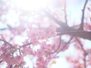 花のクローズアップの写真・画像素材[4271478]