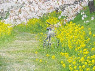 野原の花の写真・画像素材[4292258]