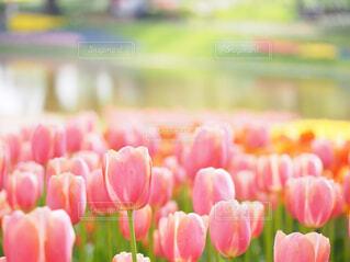 花のクローズアップの写真・画像素材[4292262]