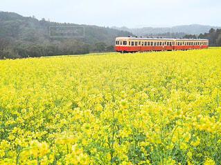 背景に山のある畑の花の写真・画像素材[4292287]