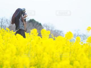 花のクローズアップの写真・画像素材[4295359]