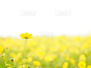 花のクローズアップの写真・画像素材[4295362]
