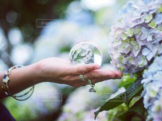 花を持っている人のクローズアップの写真・画像素材[4314528]