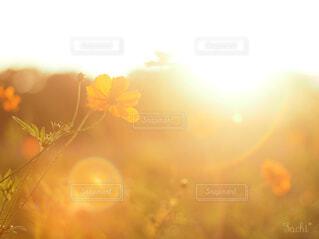 花のクローズアップの写真・画像素材[4333785]