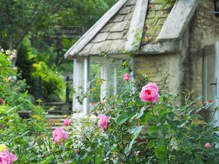 ピンクの花が庭にあるの写真・画像素材[4333799]