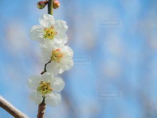 花のクローズアップの写真・画像素材[4353729]