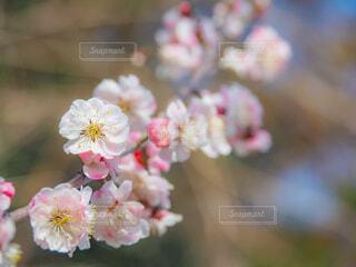 花のクローズアップの写真・画像素材[4353730]