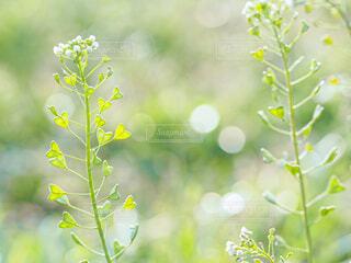 花のクローズアップの写真・画像素材[4407890]