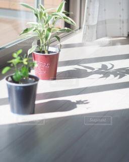 テーブルの上に花の花瓶の写真・画像素材[4414885]