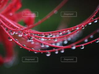 自然の写真・画像素材[4529029]