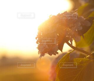 花のクローズアップの写真・画像素材[4556783]