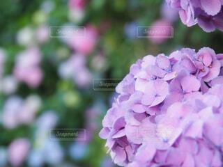 花のクローズアップの写真・画像素材[4557223]