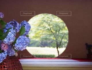 花のクローズアップの写真・画像素材[4557224]