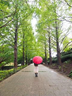 歩道にピンクの花が咲く木の写真・画像素材[4560247]